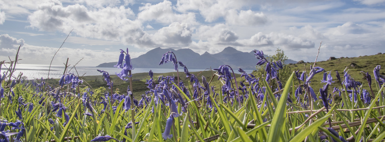 GN Isle of Eigg Bluebells 2