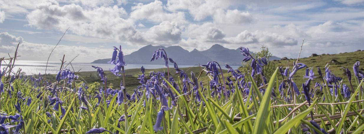 GN Isle of Eigg Bluebells 2